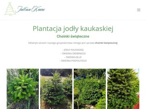Choinki-swiateczne.pl szkółka drzew ozdobnych