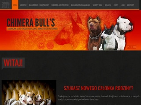 Chimerabulls.pl - mini bulterier hodowla