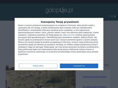 Galopuje.pl - konie