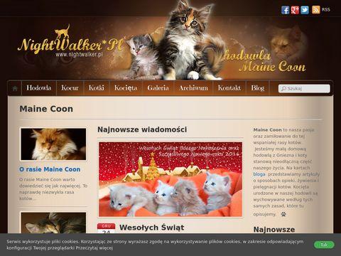 Nightwalker.pl hodowla kotów rasowych Maine Coon