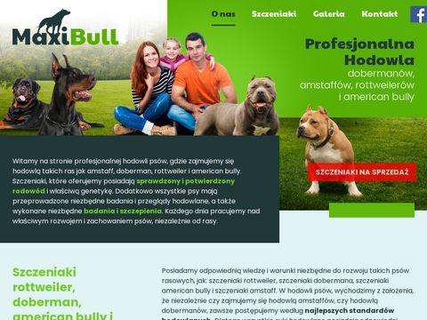 Maxibull.pl szczeniaki american bully