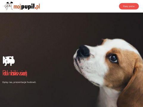 Mojpupil.pl - portal wielbicieli zwierząt zaprasza