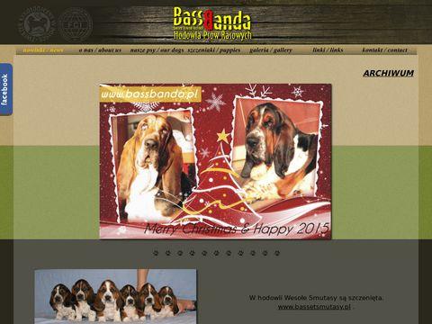 Bassbanda - hodowla psów rasy basset hound