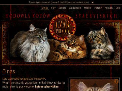 Koty syberyjskie Czarpolnocy.pl