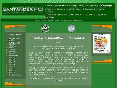 Jamniki długowłose. Hodowla Santander FCI