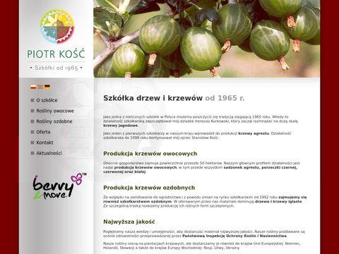 Piotr Kość - drzewa ozdone