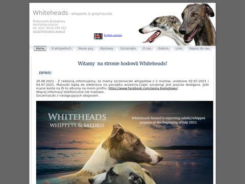 Whiteheads - whippet i greyhound