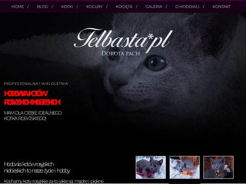 Hodowla kotów rosyjskich niebieskich i perskich