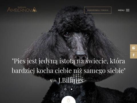 Ambernova.pl psi fryzjer Gdańsk