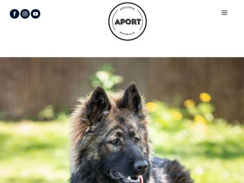 Aportbialystok.pl szkolenie owczarków niemieckich
