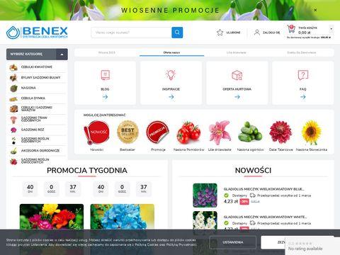 Benex dystrybucja cebulek kwiatowych